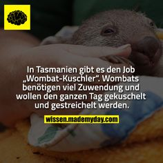 Real Facts, True Facts, Funny Facts, Funny Jokes, Hilarious, Wombat, Useless Knowledge, Quotes About Everything, Good Jokes