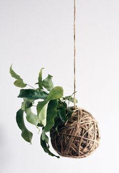Unique Hanging Kokedama Ball Ideas for Hanging Garden Plants selber machen ball Indoor Vegetable Gardening, Vegetable Garden Design, Hanging Plants Outdoor, Indoor Plants, Hanging Gardens, Patio Plants, Diy Hanging, Hanging Planters, Cactus Plants