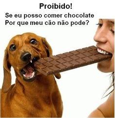INTOXICAÇÃO POR CHOCOLATE EM CÃES! BLOG VET MANIA por Paloma Zettermann SE EU POSSO COMER CHOCOLATE POR QUE MEU CÃO NÃO PODE? http://vet-mania.blogspot.com.br/2015/02/intoxicacao-por-chocolate-em-caes.html #blogvetmania #blogvetmaniaintoxicacaoporchocolate #intoxicacaoporchocolateemcaes #caesnaopodemcomerchocolate #envenenamentoemcaes #dençasemcaes #palomazettermann