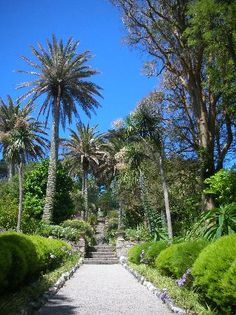 Tresco Gardens on the Isles of Scilly, probably one of Britain's best kept secrets. A sub tropical paradise just 18 miles of the coast of Cornwall, England