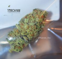 TorchNW has done it again and brought @Rainier_Rec some lovely looking bud, this time the Cinex! Super frosty and a great sativa to get the weekend started off right!  #wacannabis #legalweed #thc #i502 #tacoma #cinex #sativa