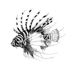 Fish Drawings, Pencil Art Drawings, Tattoo Drawings, Tattoo Artwork, Ocean Sleeve Tattoos, Ocean Tattoos, Ant Drawing, Book Art, Drawn Fish