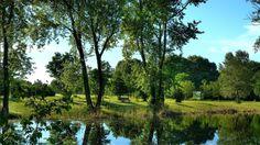 Wallpaper river, trees, shrubs, nature, landscape