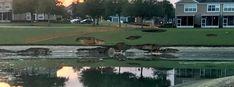 10 sinkholes open in Ocala, Florida, 8 homes evacuated