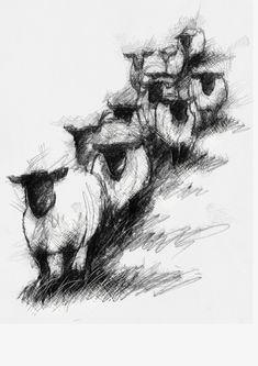 Sheep file, Artist Sean Briggs producing a sketch a day, prints available at https://www.etsy.com/uk/shop/SketchyLife #art #drawing #http://etsy.me/1rARc0J #sheep