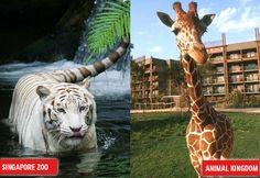 Zoológicos no mundo