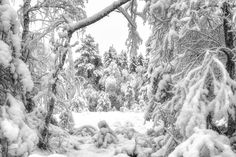 Wintergate - Hopefully the last heavy snowfall before the speing takes over Norway, Snow, Pictures, Outdoor, Photos, Outdoors, Outdoor Games, Outdoor Living, Eyes