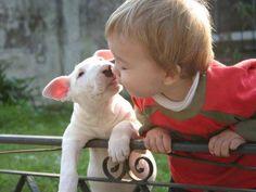 The Real Friend #BullTerrier <3 , http://www.ilovebullterrier.com