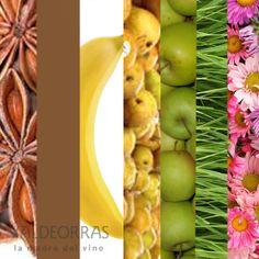Godello, Mencía y Albariño comparten 7 aromas.