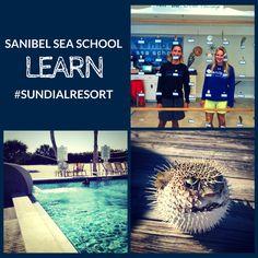 Sanibel Sea School OPEN onsite Sundial Beach Resort & Spa, offering guests an exclusive opportunity to intimately explore Sanibel's island habitat.