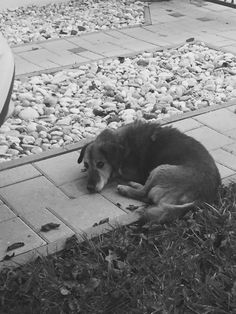 Goodnight my magical animal✨..Hope, your heaven is without pain already and sooo nice there like as you were a puppy.. miss you absolutly too much