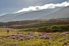 Valle de Bekaa | Ins