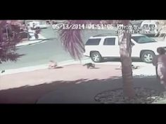 Hero Cat Saves Young Boy From Dog  Attack In Bakersfield | VIDEO
