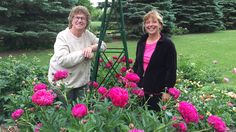 Host, Mary Holm travels to Benson, Minnesota to visit with Jill Stevens, a Swift County (Minn.) Master Gardener, who grows hundreds of different varieties of peonies. You may think there are only red, pink, and white peonies, but be prepared. Just like Jill, you will have a hard time picking your favorite with all the beautiful peonies on this show.  http://video.pioneer.org/video/2365931023/