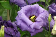 Flores para decorar en primavera 4