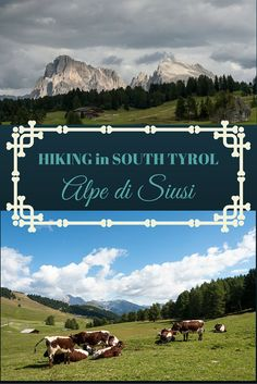 Hiking Alpe di Siusi/Seiser Alm, the largest plateau in the Alpine region, found in the German-speaking South Tyrol region of Italy!