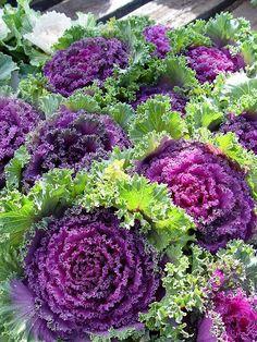 Flowering Kale: Brassica Ornamental Purple http://indeeddecor.com/create-beautiful-edible-garden/: