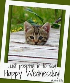 Good morning all. Have a great Wednesday! Wednesday Greetings, Wednesday Hump Day, Happy Wednesday Quotes, Good Morning Wednesday, Wednesday Humor, Wacky Wednesday, Wonderful Wednesday, Good Morning Greetings, Good Morning Good Night