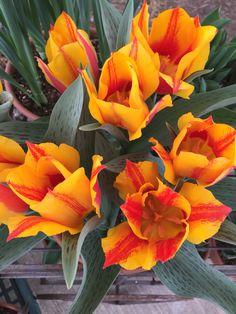 Happy Spring! We hav