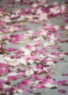 Beautiful Magnolia petals  #spring #pink