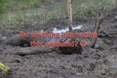 #mud #mudrun #mudrunner #running #ocr #runchat #ocrchat...