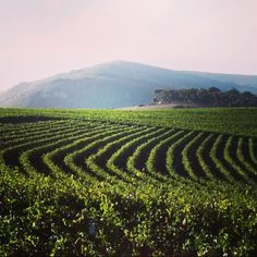 Did you know that Spice Route Wines was founded by Charles Back in 1997?