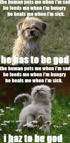 Pets see their owners as god who creates everything LOL WTF