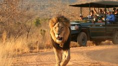 Makweti Safari Lodge   Bench Africa
