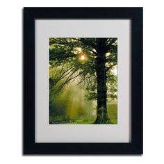 """Trademark Art """"Magical Tree"""" by Kathie McCurdy Framed Photographic Print Size: 20"""" H x 16"""" W x 0.5"""" D, Frame: Black"""
