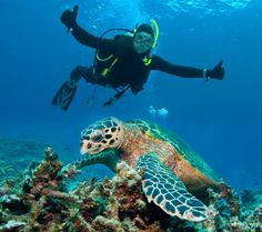 Scuba Diving in the #Canary #Islands... Simply Great!