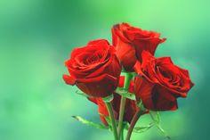 Blog üzerinde incolor16 tarafından güller