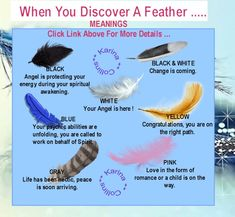 Meanings Of Feathers | a feather flown to my windscreen. It was a black & white feather......| Check out the types of feather you found.