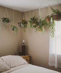 En ampel behöver ju inte bara hänga i fönstret utan går bra att hänga i taket också. Mer grönt i hemmen;)