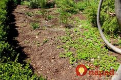 If you have a plot of land that's perfect for gardening, but it's been invaded by weeds, don't be so quick to turn to chemical sprays: newspaper garden diy summer mulch yard. Mulch Yard, Garden Mulch, Garden Weeds, Lawn And Garden, Pasto Natural, Pergola Pictures, Covered Garden, Weed Killer, Weed Control