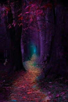 Enchanted forest – Miracles from Nature Galaxy Wallpaper, Nature Wallpaper, Wallpaper Backgrounds, Landscape Wallpaper, Wallpaper Quotes, Amazing Backgrounds, Fairy Wallpaper, Forest Wallpaper, Unique Wallpaper
