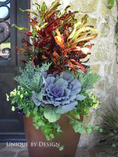 For Fall... Mammy Croton, ornamental cabbage / kale, ivy and violas....