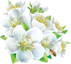 Large_White_Flowers_PNG_Clipart.png (1250×1133)