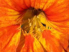 Die Schönheit der einfachen Blüten