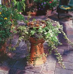 Container Gardening ideas...