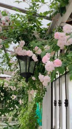 Beautiful Flowers Garden, Exotic Flowers, Beautiful Roses, Pretty Flowers, Beautiful Gardens, Backyard Plants, Backyard Landscaping, Serenity Garden, Front Garden Landscape