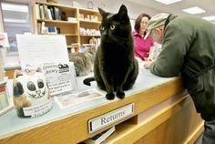 Oceanview #library cats #blackcatsrule