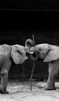 Friends 2 #wildlife #africa