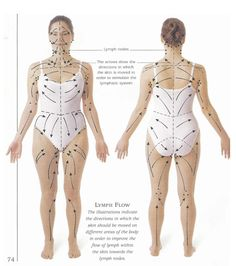 Lymph drainage pattern for skin brushing- detox, drop weight, and cure cellulite naturally. I am a new fan to skin brushing. Even if it doesn't do all those things above, my skin looks and feels great and I enjoy the mini-massage every day. Fitness Workouts, Exercise Fitness, Dry Brushing Skin, Dry Skin, Dry Brushing Benefits, Smooth Skin, Lymphatic System, Alternative Health, Health And Beauty Tips