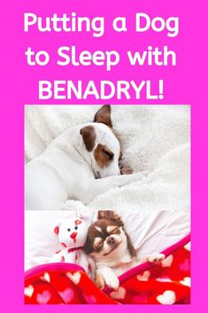 Will Benadryl make your dog sleep during stressful times? Click now to learn