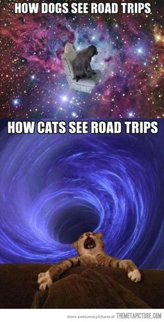 How cats and dogs see road trips…