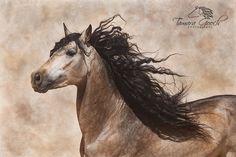PRE/Andalusian buckskin stallion Gambler