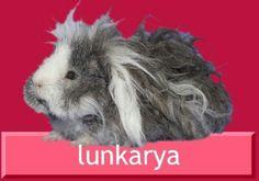 Lunkarya