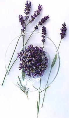 Definition: Lavender