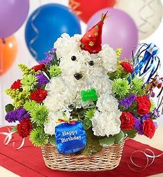 Put this playful pooch on the invite list for their next birthday bash! He arrives ready to party til the dogs come home, with his adorable birthday hat and plush birthday present. Surrounded by an abundance of cheerful, colorful blooms such as mini carnations and poms, he brings a fun expression of your best wishes for any birthday star (even if they count their age in dog years).   #denverflorist #denverflowers #denverflowerdelivery