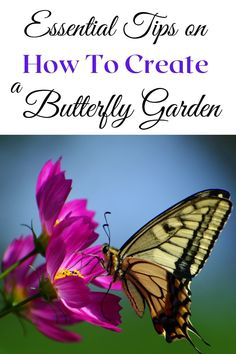 Attracting butterflies to your garden is easy if you just create their favorite environmental elements! click through to find out all the Details!